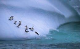 De groep pinguïnen rolt de ijzige helling in het water naar beneden Andreev royalty-vrije stock afbeeldingen