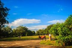 De groep rode en witte binnenlandse koeien eet groen gras op gree Royalty-vrije Stock Afbeelding