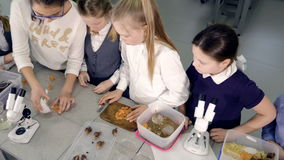 De groep schoolkinderen die voor het experiment in het laboratorium voorbereidingen treffen 4K stock videobeelden