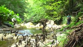 De groep toeristen kruist een bergrivier met grote keien en groen mos in wildernis natuurreservaat in bergen stock footage
