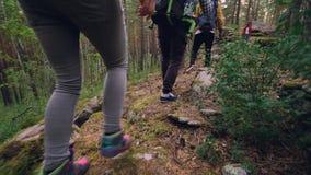 De groep toeristen wandelt in bos lopend onder bomen met installaties en rotsen rond hen, nadruk op benen en voeten stock video