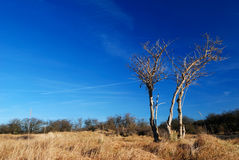 De groep van de boom in de tijd van de duinenlente Royalty-vrije Stock Foto's
