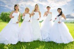 De groep van de schoonheid bruid royalty-vrije stock afbeelding
