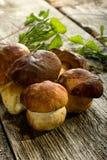 De groep van het eekhoorntjesbrood Royalty-vrije Stock Afbeelding