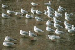 De groep van vogels royalty-vrije stock afbeeldingen