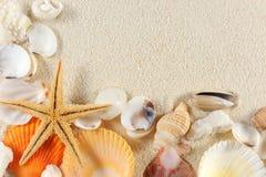 De groep van zeeschelpen Stock Afbeeldingen