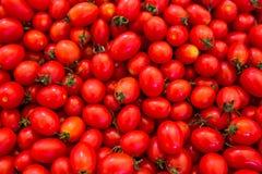 De groep verse tomaten, sluit omhoog tomaat Stock Afbeelding