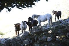 De groep Wild paard is in boomschaduw Royalty-vrije Stock Fotografie