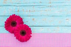 De groet of de giftkaart met donker roze gerberamadeliefje bloeien op lichtblauwe uitstekende houten achtergrond stock afbeelding