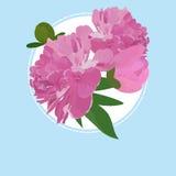 De groetkaart met pioenbloem, kan als uitnodiging voor huwelijk, verjaardag en andere vakantie of de zomerachtergrond worden gebr Stock Afbeeldingen
