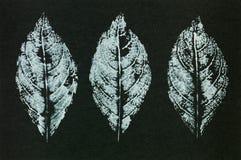 De groetkaart van de herfst Vector Stock Afbeelding