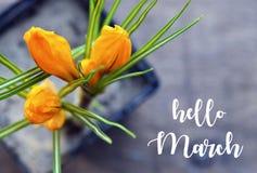 De de groetkaart van Hello Maart met gele krokus springt eerst bloemen in een bloempot op oude houten achtergrond op De lenteconc royalty-vrije stock fotografie
