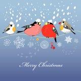 De groetkaart van Kerstmis met vogels Royalty-vrije Stock Foto's