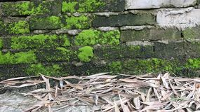 De grond is behandeld met bamboebladeren royalty-vrije stock afbeeldingen