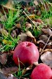 De grond van de appel Royalty-vrije Stock Fotografie