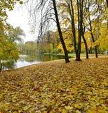 De grond werd behandeld met gele bladeren door riverï ¼ Œlike een groot tapijt stock afbeeldingen