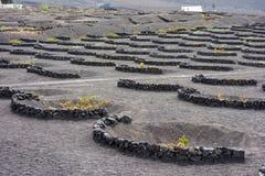 De grondwijngaarden van La Geria Royalty-vrije Stock Foto's