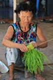 De grootmoeder is een landbouwer Stock Afbeeldingen
