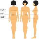 De grootte van vrouwen royalty-vrije illustratie