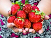 De grote aardbeien worden gehouden in vrouwelijke handen royalty-vrije stock foto