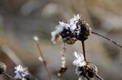 De grote achtergrond van sneeuwkristallen Stock Fotografie