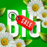 De grote affiche van de de lenteverkoop, groene achtergrond met madeliefje bloeit, vectorbeeld royalty-vrije illustratie