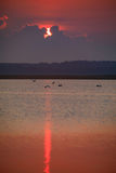 De grote Aigrettes sluiten zich aan bij pelikanen en grote blauwe reiger voor ontbijt in de vroege ochtend bij zonsopgang bij het Stock Foto's