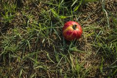 De grote appel heeft versheid en goede kleuren, goed voedsel Stock Afbeeldingen
