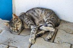 De grote beelden van de ogenkat, grote verdwaalde katten, kattenogen het mooist geluisterde katten, de mooiste kattenogen, de bee Royalty-vrije Stock Foto