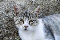 De grote beelden van de ogenkat, grote verdwaalde katten, kattenogen het mooist geluisterde katten, de mooiste kattenogen, de bee Royalty-vrije Stock Foto's