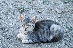 De grote beelden van de ogenkat, grote verdwaalde katten, kattenogen het mooist geluisterde katten, de mooiste kattenogen, de bee Royalty-vrije Stock Afbeeldingen