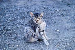 De grote beelden van de ogenkat, grote verdwaalde katten, kattenogen het mooist geluisterde katten, de mooiste kattenogen, de bee Royalty-vrije Stock Fotografie