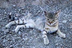 De grote beelden van de ogenkat, grote verdwaalde katten, kattenogen het mooist geluisterde katten, de mooiste kattenogen, de bee Stock Afbeeldingen