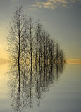 De grote Bezinning van Bomen Stock Foto