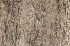 De grote bomen in de bossen Royalty-vrije Stock Afbeeldingen