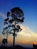 De grote bomen van het silhouet met vallend ster Stock Foto