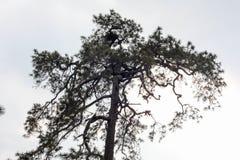De grote boom is in het bos stock foto's