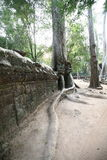 De Grote Boom van Angkor-tempel (Ta Prohm), Siem oogst, Kambodja Royalty-vrije Stock Foto