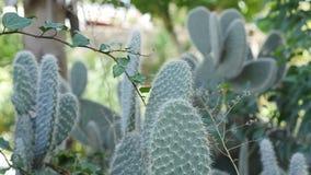 De grote cactussen groeien in de zon stock fotografie