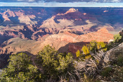 In de Grote canion & x28; zuiden rim& x29; Arizona, de V.S. Stock Foto's