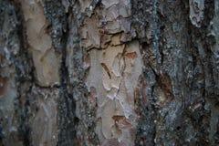 De grote close-up van de boomschors stock foto's