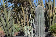 De grote combinatie van cactusspecies en diverse types van installaties Royalty-vrije Stock Foto's