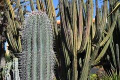 De grote combinatie van cactusspecies en diverse types van installaties Royalty-vrije Stock Fotografie