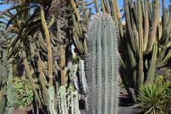 De grote combinatie van cactusspecies en diverse types van installaties Stock Foto's