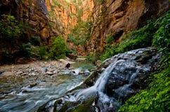 De grote die Lente in Zion Canyon, tijdens wordt genomen versmalt stijging in Zion Royalty-vrije Stock Foto