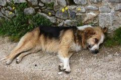 De grote droevige verdwaalde hond let op de omgeving royalty-vrije stock fotografie