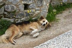 De grote droevige verdwaalde hond let op de omgeving stock afbeeldingen