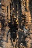 De grote foto van de tarantulaclose-up Stock Foto