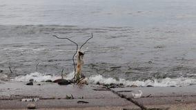 De grote golven breken op een concrete steenpijler in het vervuilde plastiek in een onweer op Meer Baikal in een grote overzees stock footage