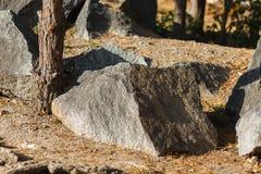 De grote granietsteen ligt in het hout onder de pijnbomen Royalty-vrije Stock Afbeeldingen
